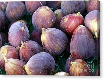 Figs Canvas Print by Denise Pohl