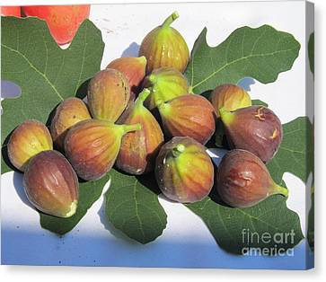 Canvas Print featuring the photograph Figs First Harvest 2012 by Tina M Wenger