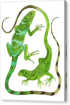 Fijian Iguanas Canvas Print by Cindy Hitchcock