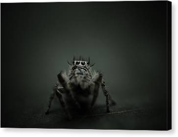 Filbert The Jumping Spider Canvas Print by Shane Holsclaw