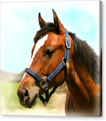 Filly Canvas Print by Paul Tagliamonte