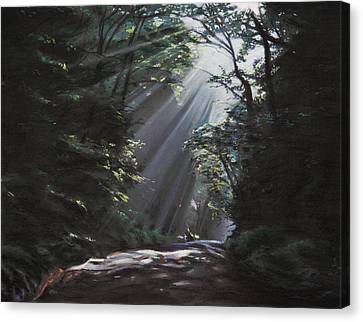 Woods Canvas Print - Filtered Light by Christopher Reid
