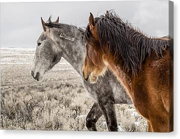 Canvas Print featuring the photograph Finally Free by Yeates Photography