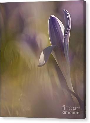 Finally  Spring Canvas Print by Inge Riis McDonald