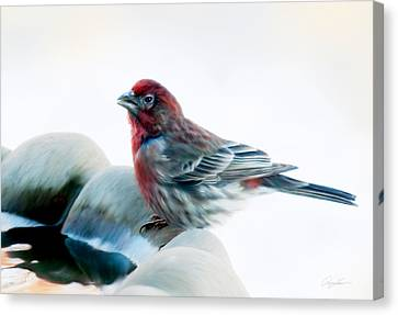 Canvas Print featuring the digital art Finch by Ann Lauwers