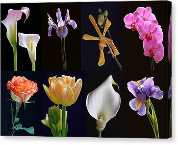 Fine Art Flower Photography Canvas Print by Juergen Roth