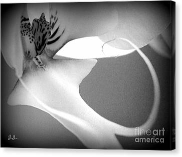 Fine Lines Black And White Canvas Print by Geri Glavis