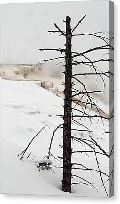 Fine Place For A Dead Tree Canvas Print by Bruce Gourley