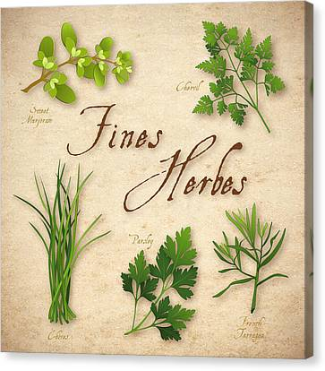 Italian Kitchen Canvas Print - Fines Herbes - French Herb Blend by J M Designs