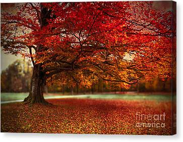 Finest Fall Canvas Print by Hannes Cmarits