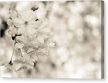 Finest Spring Time - Bw Canvas Print by Hannes Cmarits