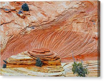 Fins In Zion Canyon Np Canvas Print