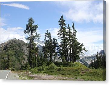 Canvas Print featuring the photograph Fir Trees At Mount Baker by Tom Janca