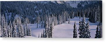 Wa Canvas Print - Fir Trees, Mount Rainier National Park by Panoramic Images