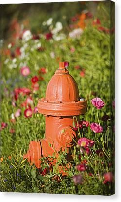 Kodiak Island Canvas Print - Fire Hydrant & Flowers Kodiak Island by Kevin Smith