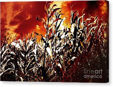 Fire In The Corn Field Canvas Print