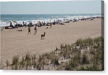 Deer On Beach Canvas Print - Fire Island Beach With Deer by June Jacobsen