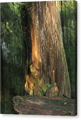 Canvas Print featuring the photograph Fire Leaf by Melissa Stoudt