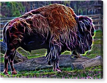 Fire Of A Bison  Canvas Print by Miroslava Jurcik