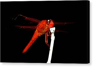 Canvas Print featuring the photograph Fire Red Dragon by Peggy Franz