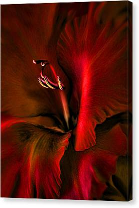 Fire Red Gladiola Flower Canvas Print