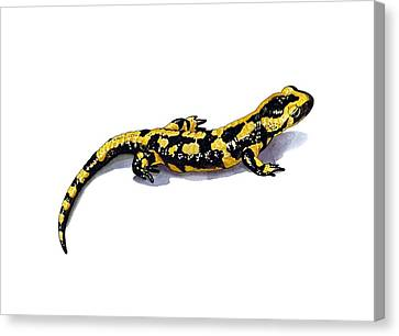 Fire Salamander, Artwork Canvas Print by Science Photo Library