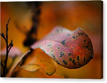 Red Leaf Canvas Print - Fire by Sarah Coppola