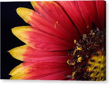 Canvas Print featuring the photograph Fire Spokes by Paul Rebmann