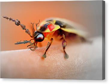 Canvas Print featuring the photograph Firefly Warrior by Chris Fraser