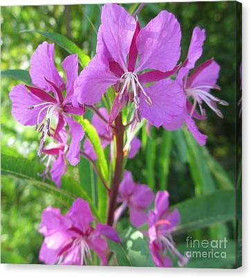 Fireweed 3 Canvas Print