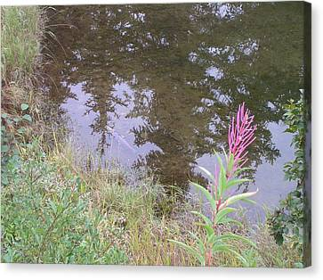 Fireweed And Salmon. Canvas Print