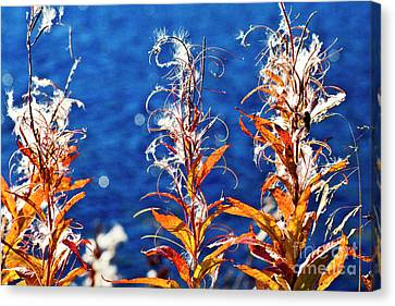 Fireweed Flower Canvas Print by Heiko Koehrer-Wagner