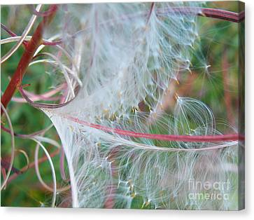 Fireweed Number One Canvas Print by Brian Boyle
