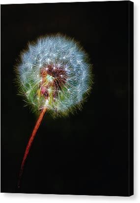 Firework Dandelion Canvas Print by Bill Tiepelman