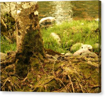 Firmly Rooted Canvas Print by Bonnie Bruno