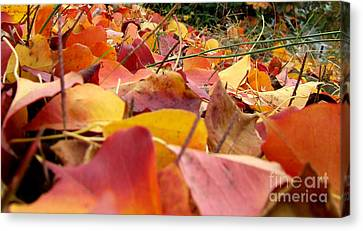 First Day Of Fall Canvas Print by Andrea Anderegg