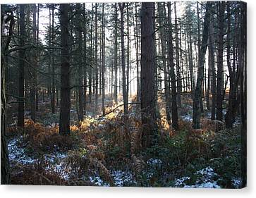 Canvas Print featuring the photograph First Fall Of Snow On Cannock Chase by Jean Walker