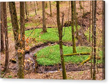 Early Spring Canvas Print - First Green In The Brown And Red Forest by Matthias Hauser