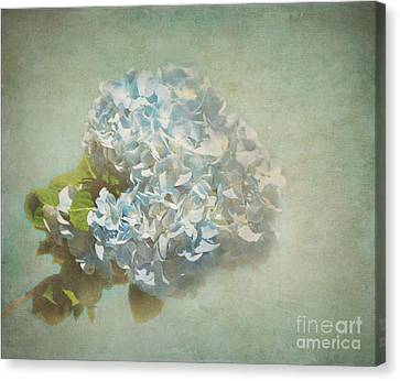 Kim Klassen Texture Canvas Print - First Hydrangea - Texture by Bob and Nancy Kendrick