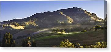First Light On The Vineyard Canvas Print by Karen Stephenson