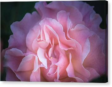Canvas Print featuring the photograph First Light by Patricia Babbitt