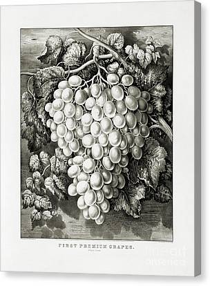 First Premium Grapes - A Royal Cluster - 1865 Canvas Print by Pablo Romero
