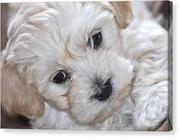 First Puppy Portrait Canvas Print