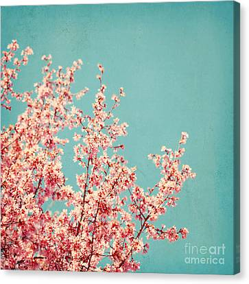 First Sign Of Spring Canvas Print by Kim Fearheiley