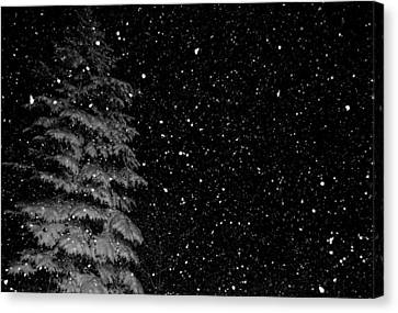 First Snow Canvas Print by Denise Beverly