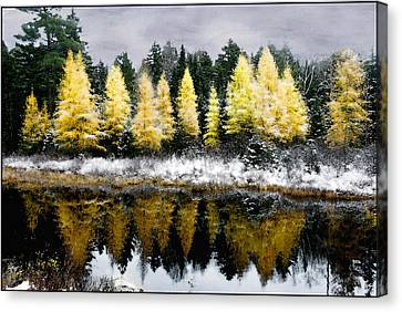 Canvas Print featuring the photograph Tamarack Under A Painted Sky by Wayne King