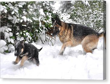 Canvas Print featuring the photograph First Snow by Tanya  Searcy