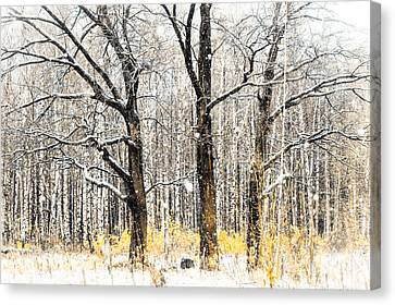First Snow. Tree Brothers Canvas Print by Jenny Rainbow