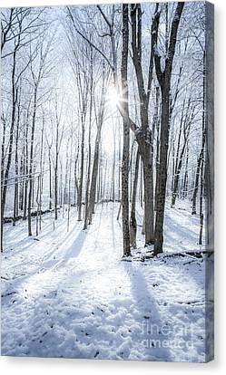 First Snowfall Canvas Print by Diane Diederich