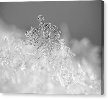Canvas Print featuring the photograph First Snowflake by Rona Black
